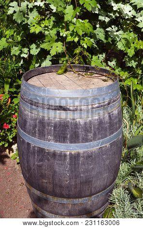 Vintage Old Wooden Barrel On Grape Leaves Background In The Vineyard.