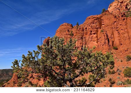 Red Rock Mountain Range Of Sedona, Arziona Against A Clear Blue Sky And A Coniferous Tree.