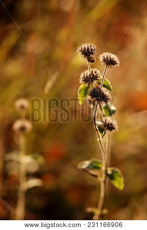 Pair Of Plants In Sunlight On Autumn Meadow, Abstract Embrace Of Dancing Couple