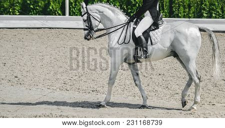 Elegant Rider Woman And White Horse. Beautiful Girl At Advanced Dressage Test On Equestrian Competit