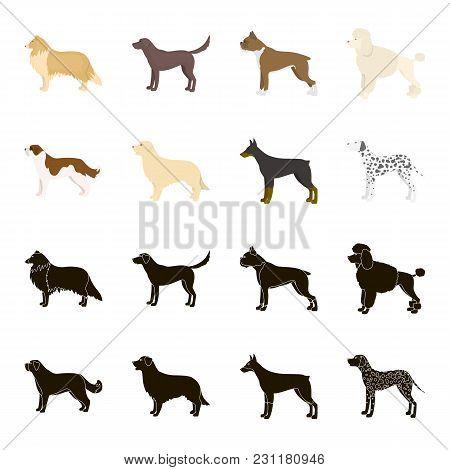 St. Bernard, Retriever, Doberman, Labrador. Dog Breeds Set Collection Icons In Black, Cartoon Style