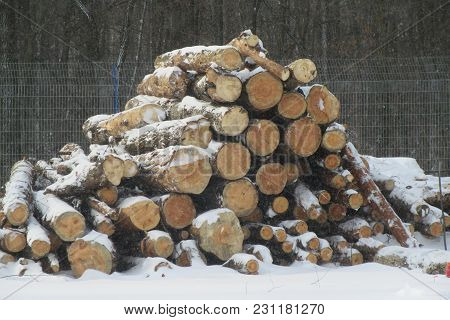 Woodpile Of Fresh Cutted Logs Covered By Snow Firewood Stacked In A Heap. Background Of Firewood.