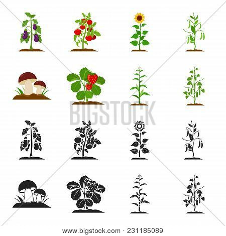 Mushrooms, Strawberries, Corn, Cucumber.plant Set Collection Icons In Black, Cartoon Style Vector Sy
