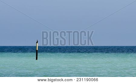 Cormorant And A Bicolor Sea With A Sandbar At Summer