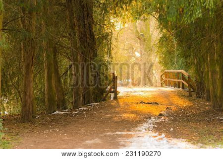 Magic Bridge In The Deep Forest During The Sunset. Magical Colors And Mystery Sunlight