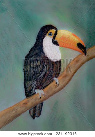 An Art Work Of A Toucan Sitting On A Tree Branch. A Picture Was Drawn With Soft Pastel On A Burgundy