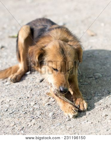 Dog Eats A Bone . In The Park In Nature