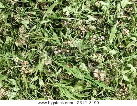 Motherwort. Dry Herbs For Use In Alternative Medicine, Phytotherapy, Spa, Herbal Cosmetics. Preparin