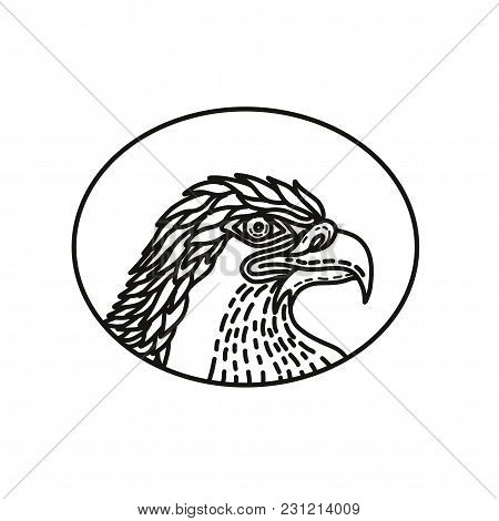 Mono Line Illustration Of Head Of A Sea Eagle, Bald Eagle,a Large Bird Of Prey Of The Family Accipit