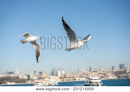 Single Seagull Is Found On The Shore Of The Sea