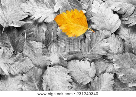 Yellow Autumn Leaf Among Black And White Leaves