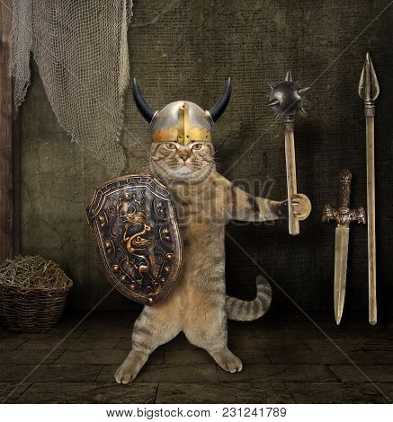 The Cat In A Viking Helmet Holds A Mace And A Shield. He Is In The Armory Room.