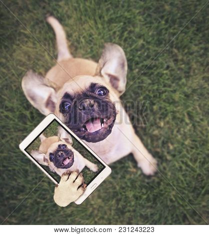 cute chihuahua pug mix puppy playing outside in fresh green grass taking a selfie toned with a retro vintage instagram filter app or action effect