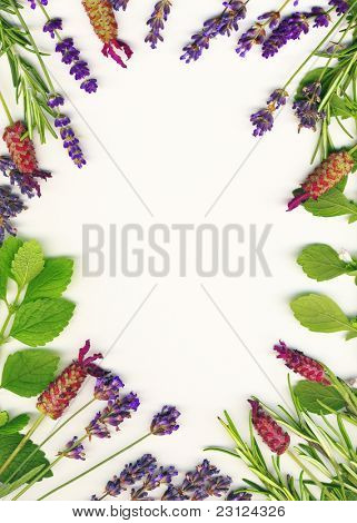 A frame made of healing herbs (lavender and rosemary) on a white background isolated