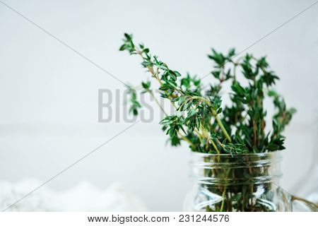 Closeup shot of green thyme plant in glass isolated on white