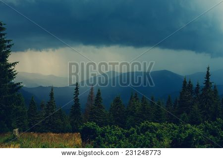 Dramatic View In The Mountains Before Storm - Green Mountain Ridges, Covered With Coniferous Trees,