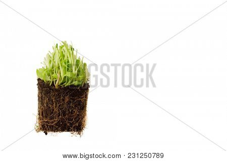 green sprouts in soil cross section, isolated on white