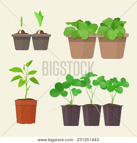Young Plants In Plastic And Biodegradable Peat Pots. Vector Gardening Concepts.