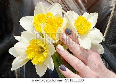 Female Hands With Daffodils, Manicure. Close Up