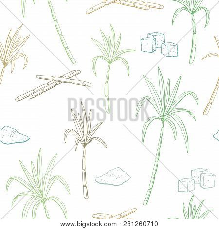 Sugarcane Graphic Green Blue Brown Color Seamless Pattern Sketch Illustration Vector