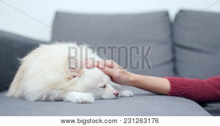 Pet owner touch on her dog