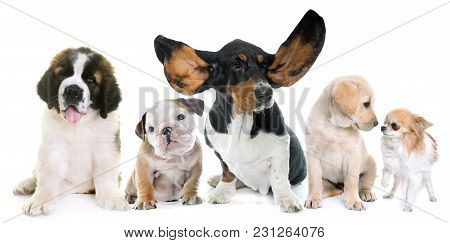Five Puppies In Front Of White Background