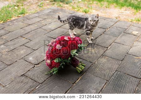 Red Bridal Bouquet From Dahlias Lies On The Wooden Background Near Walking A Stray Cat. Wedding Flor