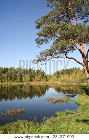 Peat Lake In The Autumn Forest. Russia