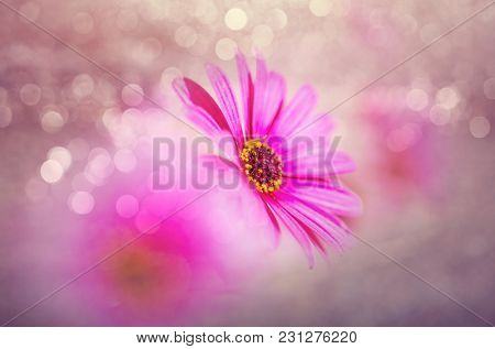 Close-up shot of the beautiful flowers. Suitable for floral background.