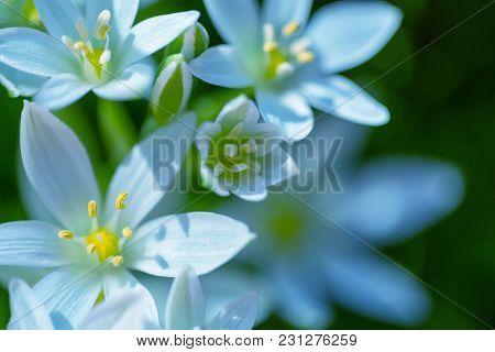 Snowdrops in spring season
