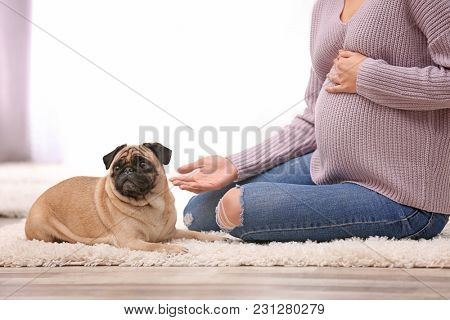 Pregnant woman with cute dog at home. Friendship between pet and owner