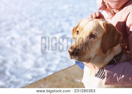 Cute lovely dog with owner outdoors on winter day