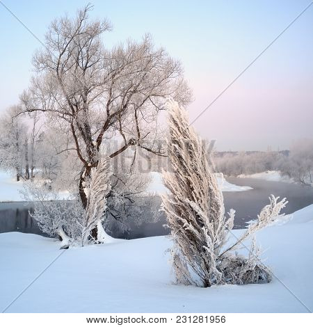 Covered With Hoarfrost Trees On The Bank Of The Winding River In The Early Morning Of Winter, The Sq