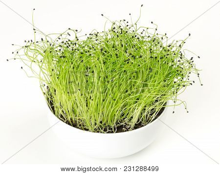 Leek Microgreen In White Porcelain Bowl. Green Shoots Of Allium Ampeloprasum With Seed Peels On The