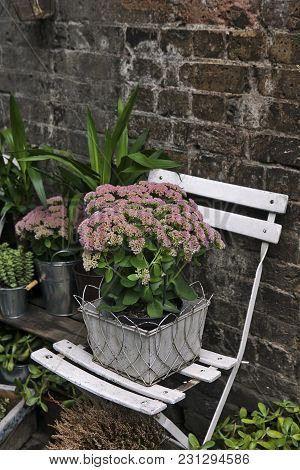 Pot Witn Kalanchoe On The White Chair As A Decoration Of The Garden