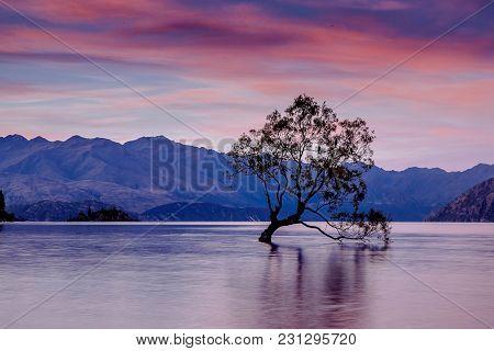 Alone tree in water, Wanaka lake, SOuth Island, New Zealand