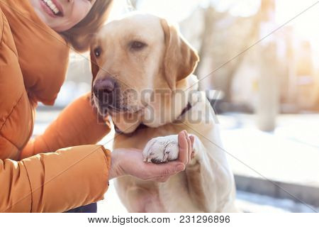 Cute dog giving paw to woman outdoors. Friendship between pet and owner