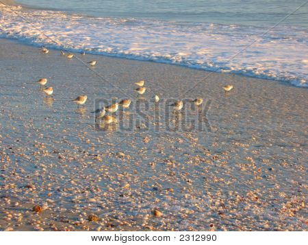 Birds And Shells