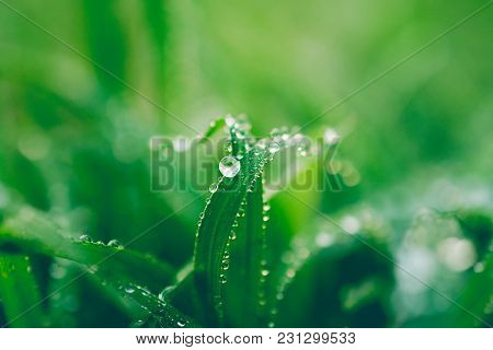 Water Drops On Leaf For Background