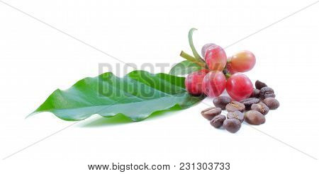 Coffee Beans Close Up Isolated On Background
