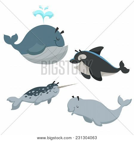 Cartoon Sean Animals Set. Whale With Fountain, Killer Whale Orca, White Beluga Whale And Narwhal. Se