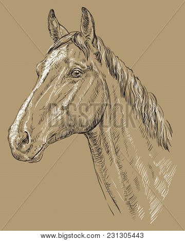 Trakehner Portrait. Horse Head  In Profile In Black And White Colors Isolated On Beige Background. V