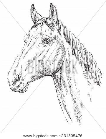 Trakehner Portrait. Horse Head  In Profile In Monochrome Color Isolated On White Background. Vector