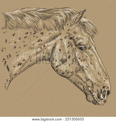Horse Portrait-2 On Brown Background
