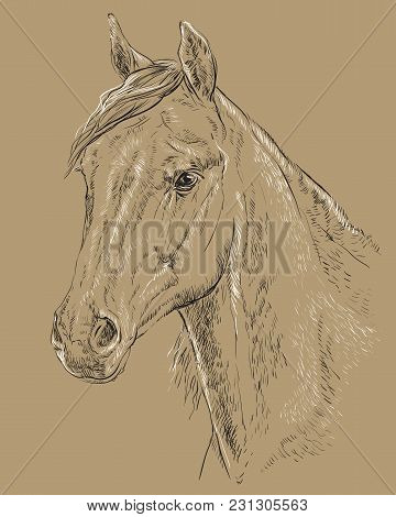 Arabian Horse Portrait. Horse Head  In Profile In Black And White Colors Isolated On Beige Backgroun