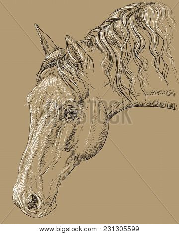 Horse Portrait. Horse Head With Long Mane In Profile In Black And White Colors Isolated On Beige Bac