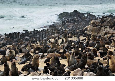 Cape Fur Seals On The Stone Coast Of Atlantic Ocean. Seal Colony On The Cape Cross, Skeleton Coast,