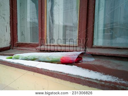 A Bouquet Of Red Tulips Lies On The Old Window. Recent Snow Has Covered The Flowers When All Of A Su
