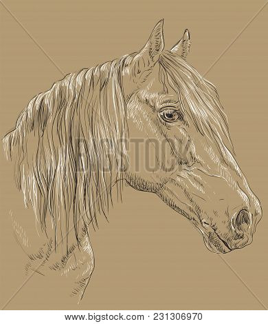 Orlov Trotter Horse Portrait. Horse Head  In Profile In Black And White Colors Isolated On Beige Bac