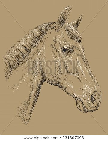 Trakehner Horse Portrait. Horse Head  In Profile In Black And White Colors Isolated On Beige Backgro